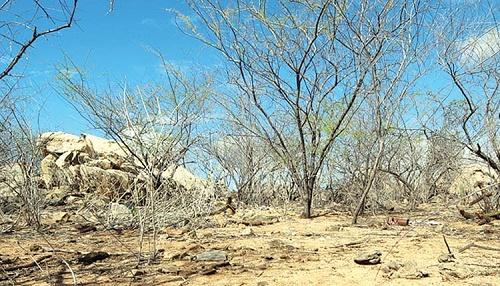 A Caatinga Maranhense será uma das regiões que mais serão afetadas pela mudança climática (Foto: Divulgação)